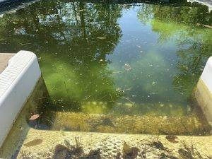A green pool with living pool algae.