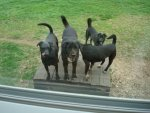Our three mutts with Justin\'s mutt.jpg