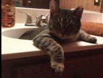 cat-sink.jpg