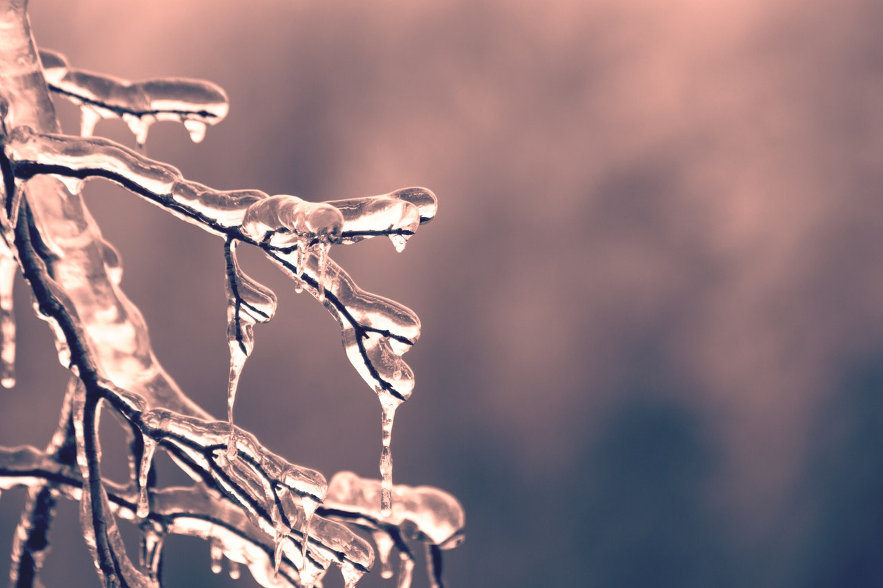 Blur-branch-close-up-cold.jpg
